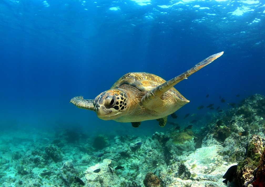 GPS-Turtle