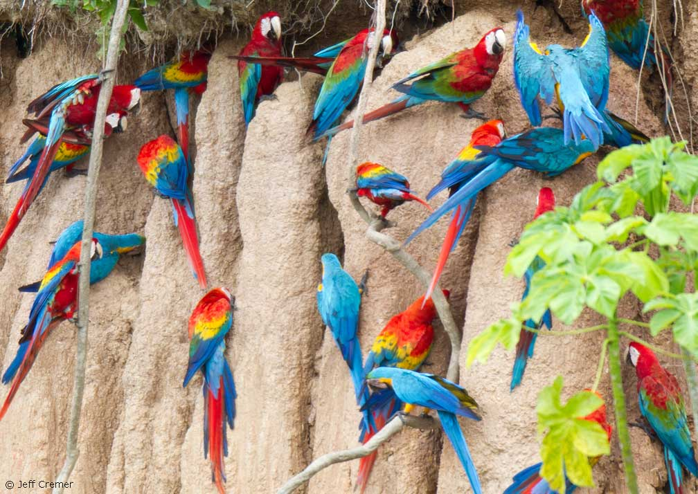 Macaws-RE