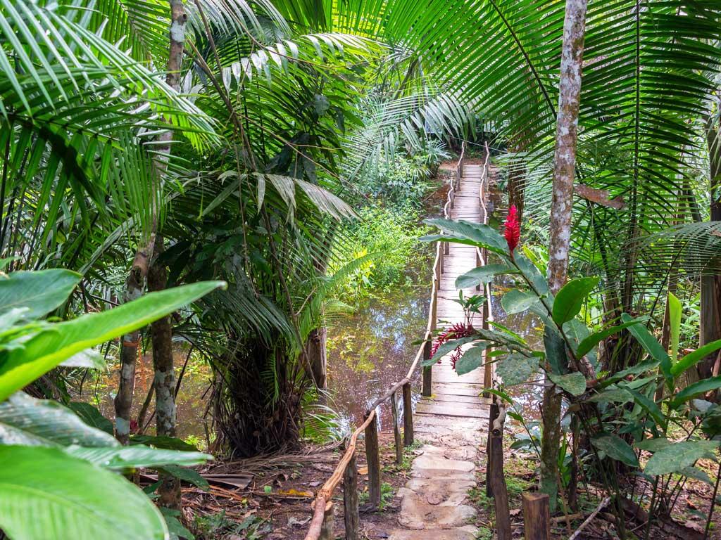 Iquitos-Jungle-bridge19