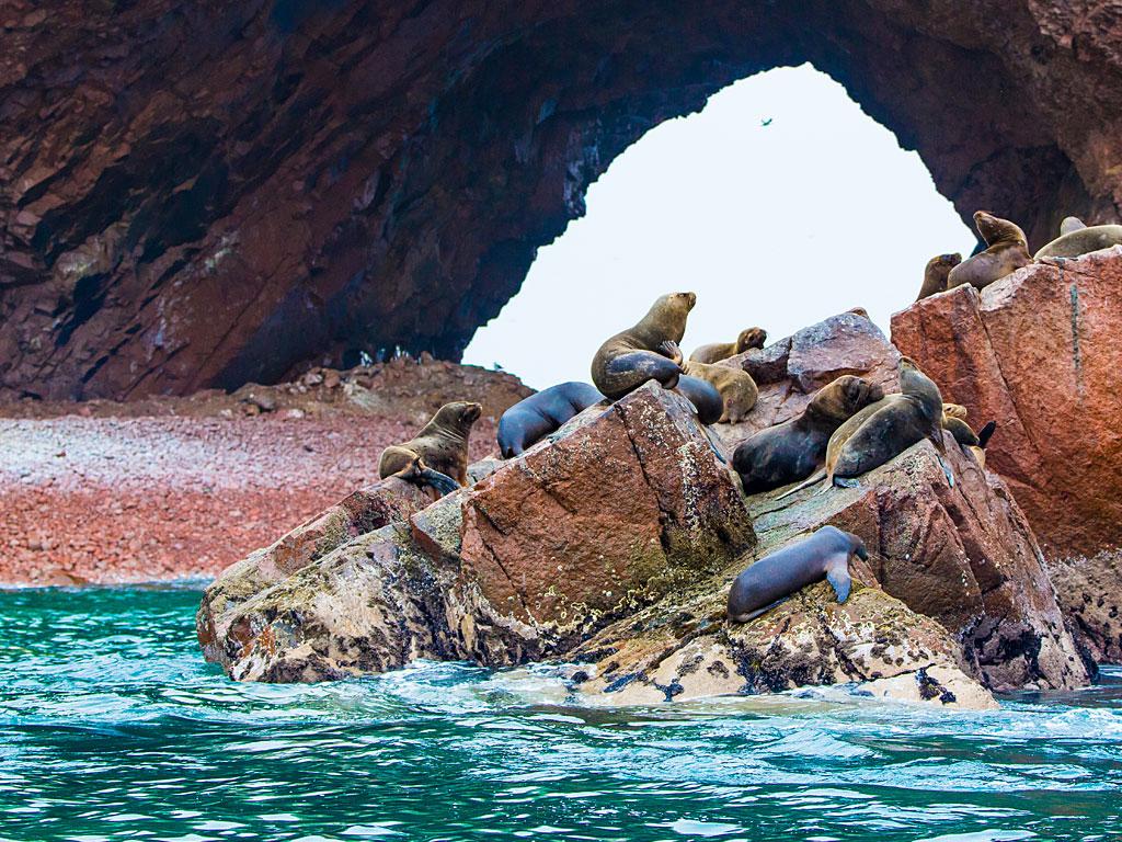 paracas-sea-lions-2-19